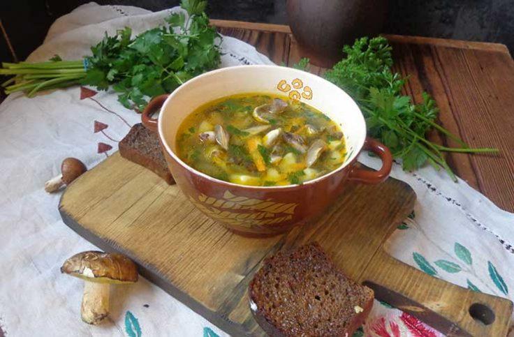 gribnoi-sup